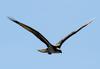 Hondaclassic_osprey