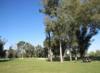 Balboa3rd_tree_s