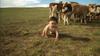 Babies_mongolia