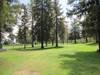 Encino14th_treeline
