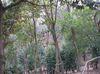 Karakida_woods