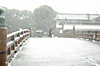 Snowingtokyo_jan14th