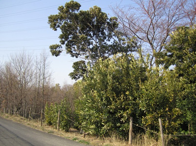 Ikutaryokuchi1