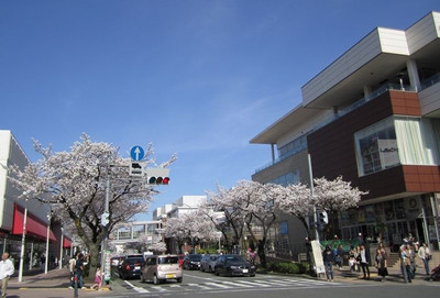 Sakura_mainstreet1