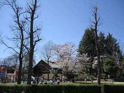 Sakura_park2