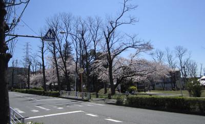 Sakura_park2b