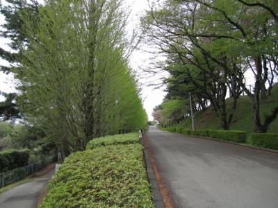 Nakazawaike_1