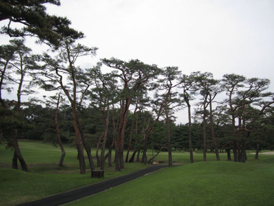 18thtee_pinetrees_s