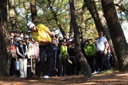 Dunlop_sun_hideki_tree2