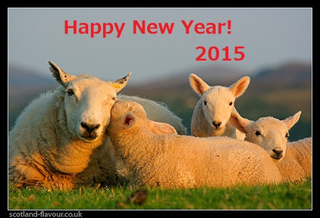 Scottishsheep_2015