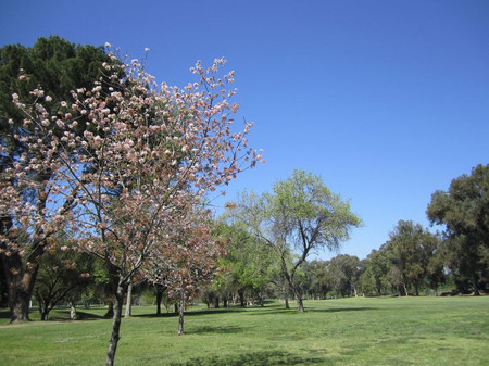 Balboa3rdhole_tree
