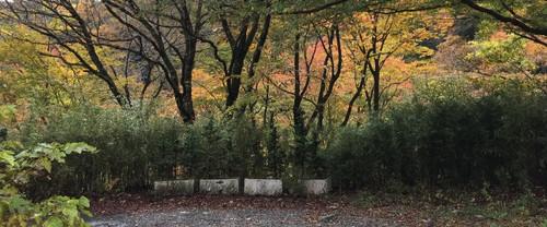 1_trees