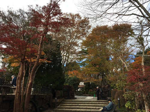 1_trees_museum