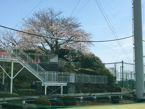 Sakura_range